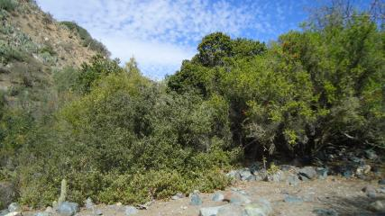 Imagen de Se oficializa la creación del Santuario de la Naturaleza Quebrada Llau llau.