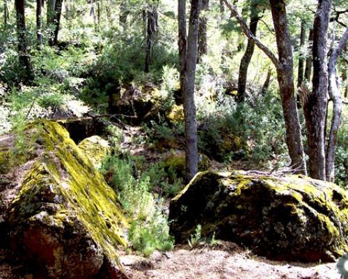 Imagen del monumento Predio denominado Los Huemules del Ñiblinto