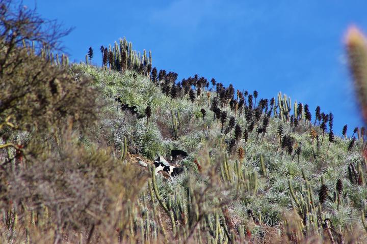 Imagen del monumento Quebrada Llau Llau