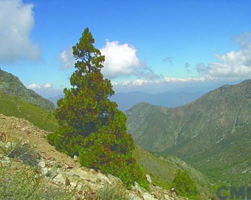 Imagen del monumento Serranía El Ciprés