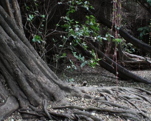 Imagen del monumento Bosque Las Petras de Quintero y su entorno